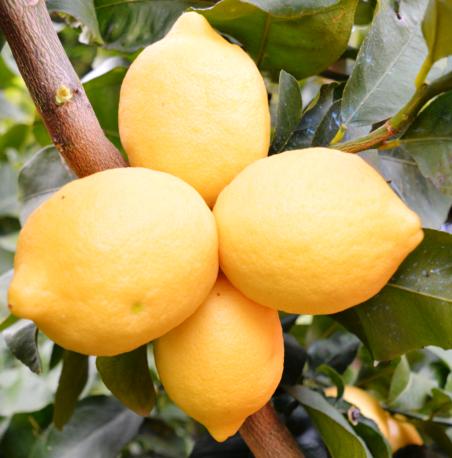 limoni1