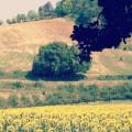 Casa-Vallona-panorama